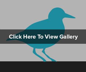 Thumbnail-Hover Bird.jpg